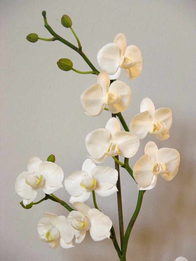 Орхидея фаленопсис из полимерной глины мастер класс